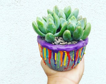 Limited Pride Month edition succulent arrangement grey
