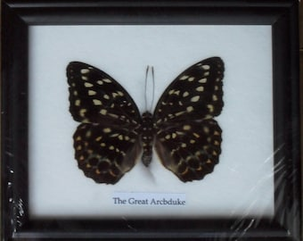 Real BUTTERFLY Collection Taxidermy in Frame / BTF01NN
