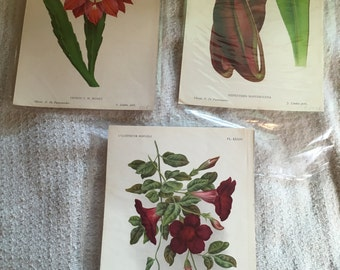 Antique Botanical prints - set of 3