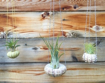 Hanging Sea Urchin Air Plant Trio - A Unique Holiday or Birthday Gift