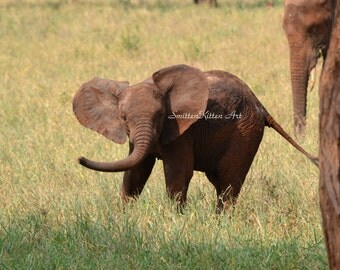 African Baby Elephant Note Cards
