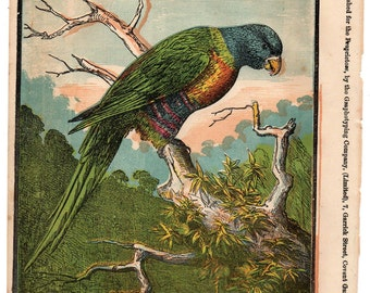 Antique print Pretty Polly parrot print 1870
