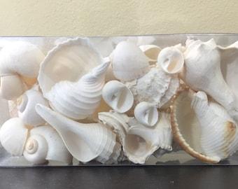 Box of White Shells