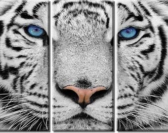 Framed Huge 3-Panel White Tiger Canvas Art Print - Ready to Hang