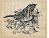 Sparrow Bird Instant digital download graphic image for iron on fabric transfer burlap decoupage paper pillow scrapbook tote No gt117