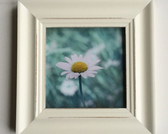 Framed print, daisy photo, flower photo, shabby decor, green, mint, teal, aqua