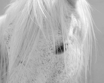 White horse photo, horse photography, black and white horse photo, equine art, nursery decor, horse art