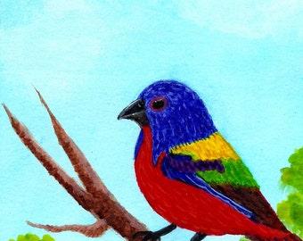 Painted Bunting, Watercolor bird, songbird, print of watercolor, Giclee print, songbird print,colorful songbird,bunting,bird art, Item #PBP1