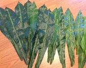 """Silk Green Leaf For Polynesian Costumes. Perfect Pieces For Making Your Own Creations, Hip Hei, Hair Pieces. 12 Leaves Measures 19"""" Long."""