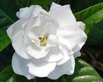Gardenia Pure Perfume Mist 1/2 oz. Gardenia Perfume, Romantic Perfume, Feminine Perfume, Sensual Perfume, Perfume Gift For Her, Perfume Gift