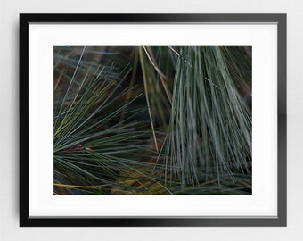 Photography Print - Fine Art Macro Green Nature Pine Trees Needles Simple Texture Modern Wall Cling Art Print 4x6 5x7 8x10 11x14 16x20 20x24