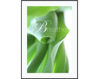 Breathe Print, Zen Quote Art, Large Nature Photography, Yoga Studio Decor, Green Office Decor
