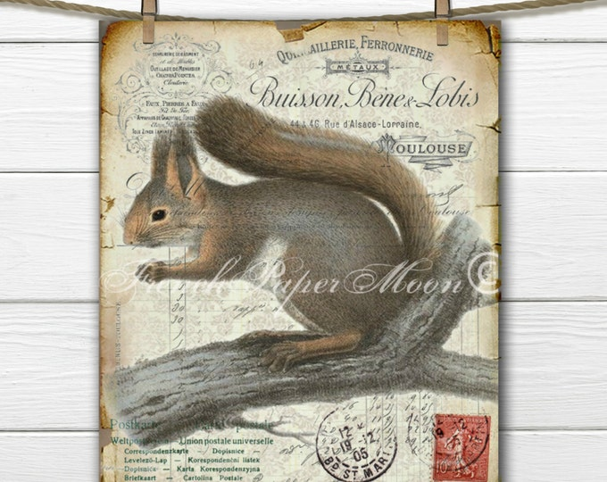 Digital Squirrel, Vintage French Woodland Graphic, Rustic Squirrel Download, Printable Squirrel Pillow Image