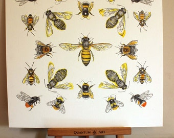 Limited Edition Bee Species Giclee Print