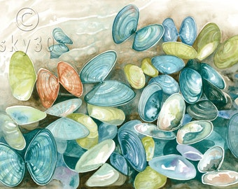 """Watercolor Print: """"Washed Up"""" Coquinas"""