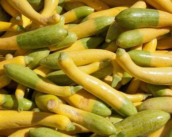 Zephyr Summer Squash, buttery taste, 10 seeds