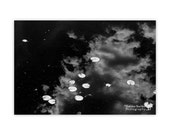 Lilypads in the Clouds. Photographic Print by Sheldon Buchler.