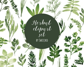 Digital Clipart, Watercolor Herbs, Hand Painted Leaves Basil, Sage, Thyme, Tarragon, Rosemary, Mint, Parsley, Chives, Cilantro, foliage