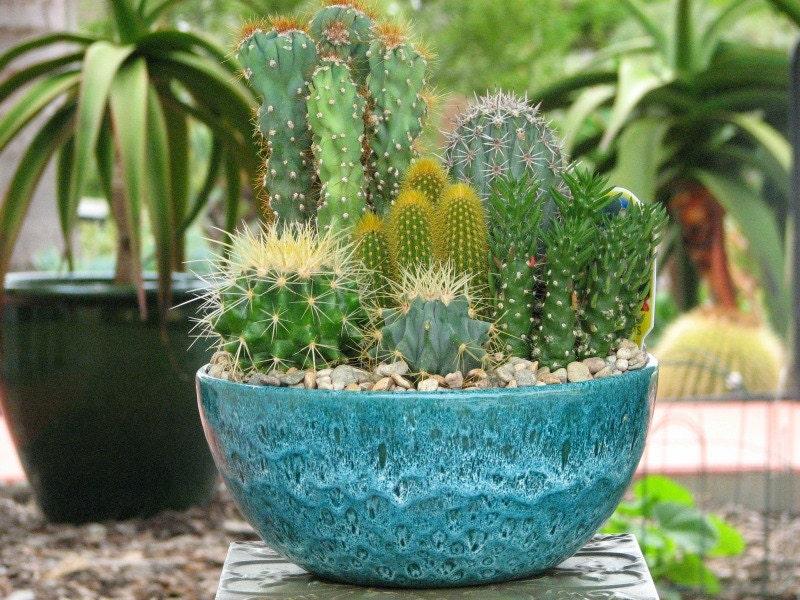 Desert Cactus Dish Garden 10 Inch Diameter Glazed Ceramic Pot