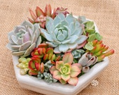 Mother's Day The Hexi-succulent arrangement/centerpiece in white hexagon container/bowl