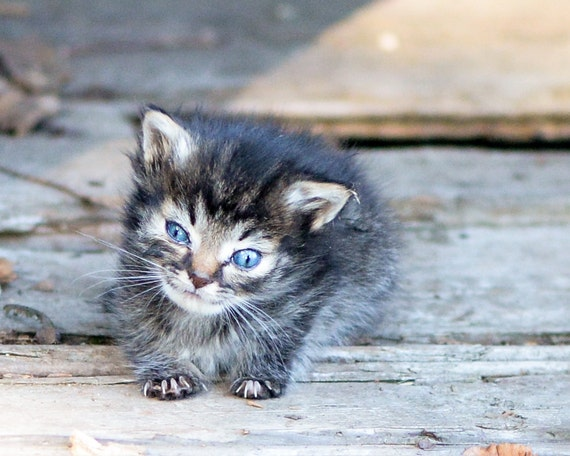 Photograph of Nano, the tiniest kitten (for download)