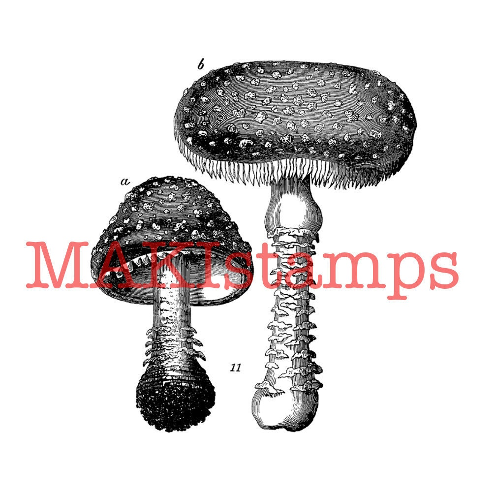 Agaric who made up the rules for dating 6