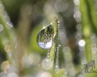 Raindrops Lens, Photographic print