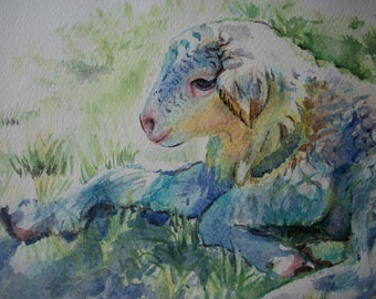 Lamb watercolor, original painting, watercolor animals