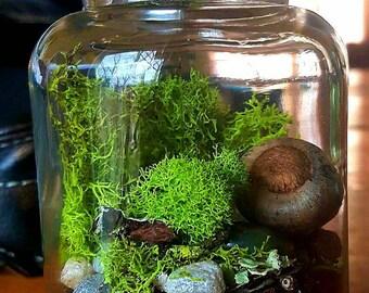 Desk Moss Terrarium