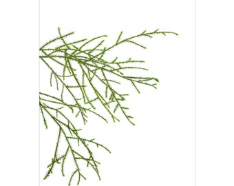 A3 Botanical Study Print — Rimu