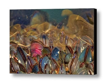 Mussel Shells, Marine Biology, Life Aquatic, Marine Biologist Gift, Nautical Decor, Seafood Photograph, Underwater Photo, Ocean Animals