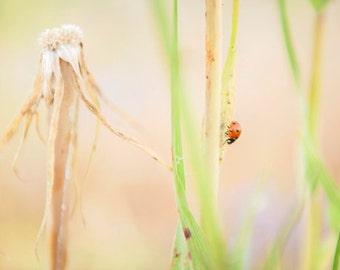 Ladybug I - Mounted Photographic Print