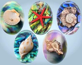 Seashells digital collage sheet, 30x40mm,18x25mm & 18x13mm oval images - seashells on abalone collage Images instant download