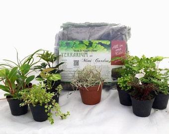 Hirt's Terrarium Kit with 5 Terrarium Plants, 5 Ferns