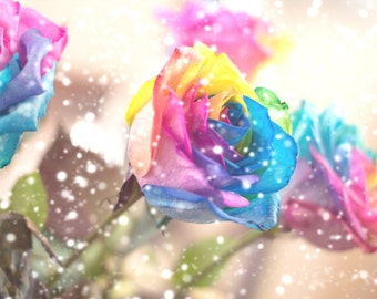 Rainbow Dreamland