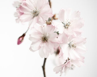Ancient blossom No.1, photoart print/poster, 21x30cm (8,3x11,8inches)