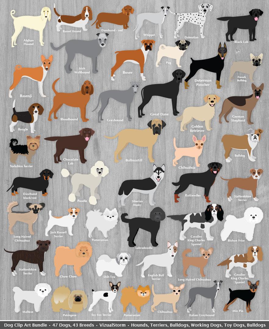 Scrapbook paper dogs - Dog Clip Art Bundle Digital Dog Clipart Graphic Illustration Pet Clipart Toy Hound Terrier Bulldog Animal Rescue Digital Scrapbook Clipart