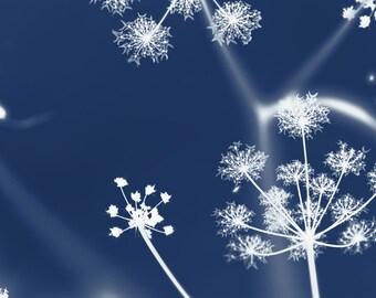Cyanotype, original fine art photography, print, scotland, highlands, plant, blue, nature, vintage, flower, old, uk