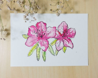 Pink Azaleas – Ink & Watercolour Postcard Print + FREE shipping