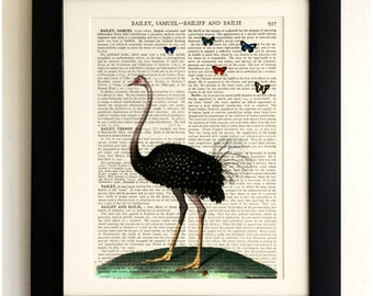 FRAMED ART PRINT on old antique book page - Big Ostrich, Butterflies, Vintage Wall Art Print Encyclopaedia Dictionary Page