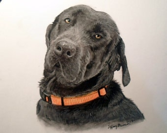 Colored portrait of a dog