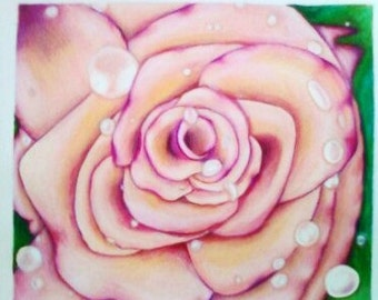 Rose  Colored Rain Prismacolor pencils on paper 11 x 13in
