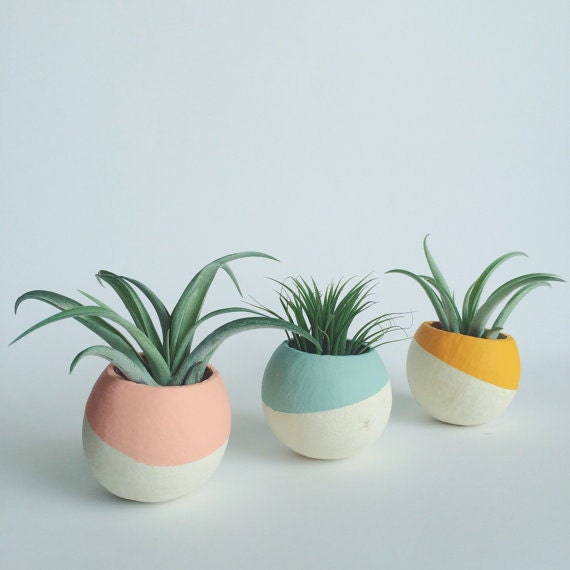 Paint dipped pod air plant planters air plant included for Air plant planters
