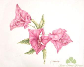 Bougainvillea, original watercolour botanic art painting