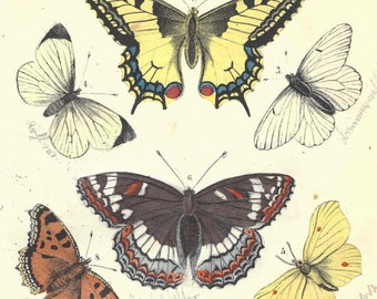 1857 Antique Butterflies Insects Entomology Print Hand Colored Engraving German Original