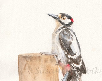 Woodpecker Watercolor, Giclee Print