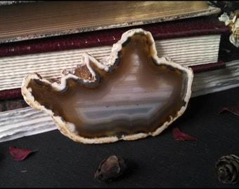 Brown Agate Slice ~ Agate Stone ~ Agate Slab ~ Geode Slice ~ Agate Home Decor