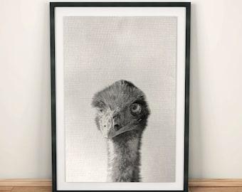 Ostrich printable art, Ostrich Print, Bird Prints, Wall Ideas, Woodlands Decor, Wall Art, Black and White Animal Print,  wall decoration