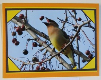 Cedar Waxwing all-occasion greeting card