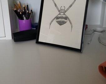 A4 Hand Drawn Saint Andrews Cross Spider Print, Scientific Illustration, Entomology